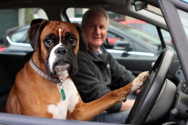 dog honking carhorn